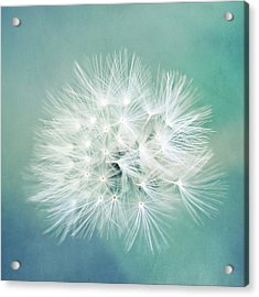 Acrylic Print featuring the photograph Blue Awakening by Trish Mistric