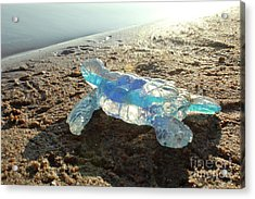 Blue Baby Sea Turtle From The Feral Plastic Series By Adam Long  Acrylic Print