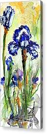 Blue Bearded Irises Watercolor Acrylic Print