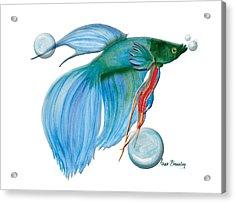 Blue Beta Fish Acrylic Print