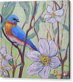 Blue Bird And Blossoms Acrylic Print