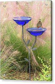Blue Bird Bath Acrylic Print by Rosalie Scanlon