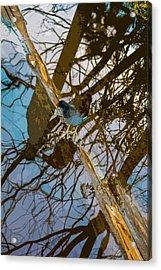 Blue Bird Acrylic Print by Josy Cue