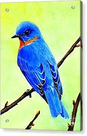 Blue Bird King Acrylic Print