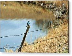 Blue Bird Acrylic Print by Mario Brenes Simon