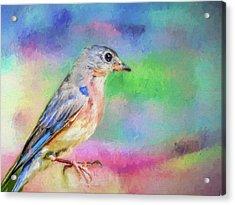Blue Bird On Color Acrylic Print