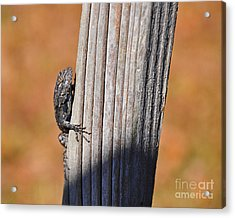 Acrylic Print featuring the photograph Blue Bits by Al Powell Photography USA