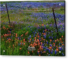 Acrylic Print featuring the photograph Bluebonnets #0487 by Barbara Tristan