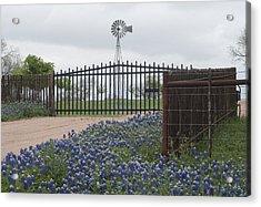 Blue Bonnets By Gate Acrylic Print