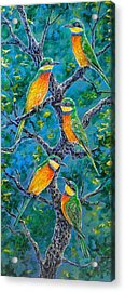 Blue Breasted Bee Eater Acrylic Print by Gail Butler