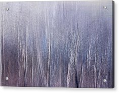 Blue Brush Acrylic Print