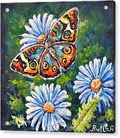 Blue Buckeye Acrylic Print