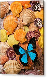 Blue Butterfly And Sea Shells Acrylic Print by Garry Gay