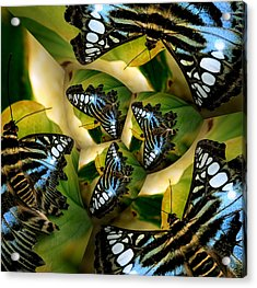 Blue Butterfly Collage Acrylic Print by Irma BACKELANT GALLERIES