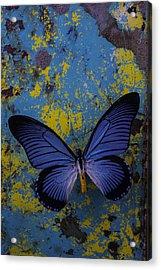 Blue Butterfly On Rusty Wall Acrylic Print