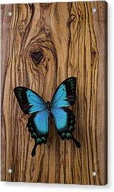 Blue Butterfly On Wood Grain Acrylic Print