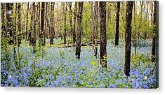 Blue Carpet Acrylic Print