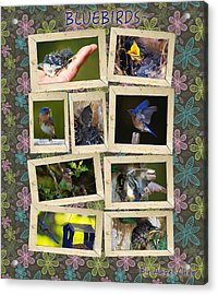 Acrylic Print featuring the photograph Blue Collage by Angel Cher