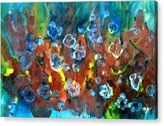 Blue Columbine Acrylic Print by Don  Wright