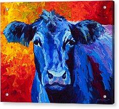Blue Cow II Acrylic Print