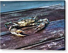 Blue Crab - Above View Acrylic Print