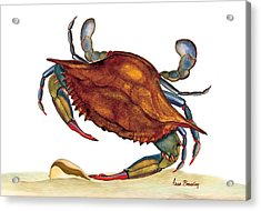 Acrylic Print featuring the painting Blue Crab by Anne Beverley-Stamps