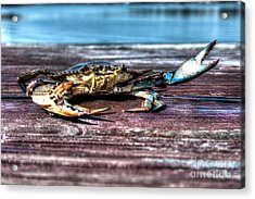 Blue Crab - Big Claws Acrylic Print