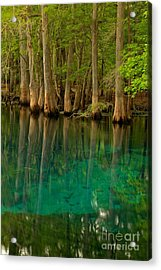 Blue Cypress Reflections Acrylic Print by Adam Jewell