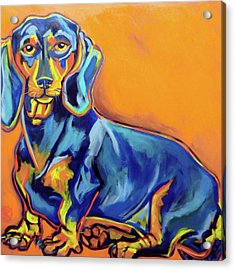 Blue Dachshund Acrylic Print by Ilene Richard