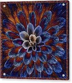 Blue Dahlia Acrylic Print