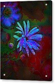 Acrylic Print featuring the photograph Blue Daisy by Lori Seaman
