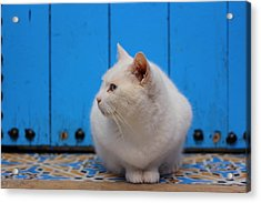 Acrylic Print featuring the photograph Blue Door White Cat by Ramona Johnston
