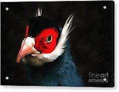 Blue Eared Pheasant Acrylic Print