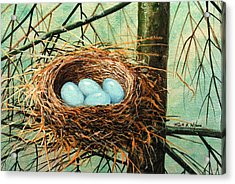 Blue Eggs In Nest Acrylic Print by Frank Wilson