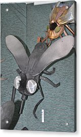 Blue Eyed Black Fly Acrylic Print by Michael Jude Russo