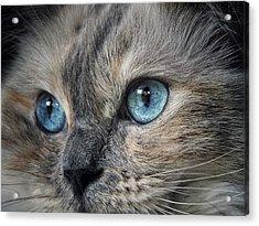 Blue Eyed Girl Acrylic Print by Karen Stahlros