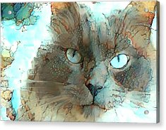 Blue Eyed Persian Cat Watercolor Acrylic Print
