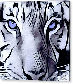 Blue Eyed Tiger Acrylic Print