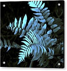 Blue Fern Acrylic Print by Susanne Van Hulst