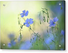 Blue Flex Flower Acrylic Print