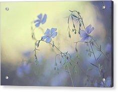Blue Flex Flower. Nostalgic Acrylic Print