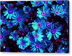 Blue Flower Arrangement Acrylic Print by Phill Petrovic