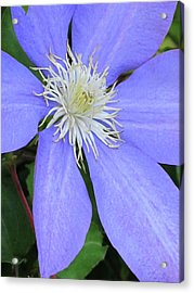 Blue Flower Acrylic Print by Michele Caporaso