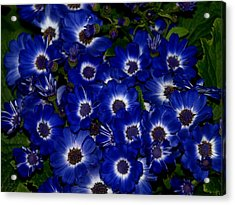 Blue Flowers Acrylic Print by Laura Allenby