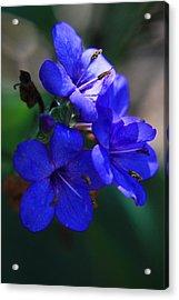 Blue For The Sun Acrylic Print
