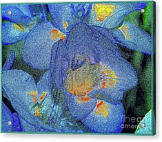 Acrylic Print featuring the photograph Blue Freesia's by Lance Sheridan-Peel