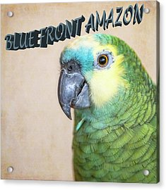 Blue Front Amazon Acrylic Print