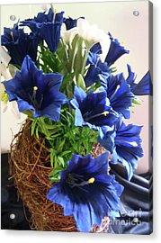 Blue Gentian  Acrylic Print