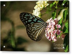 Blue Glassy Tiger Acrylic Print by Michelle Meenawong