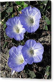 Acrylic Print featuring the photograph Blue Glory by Peg Urban